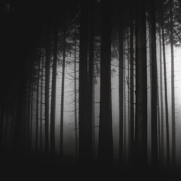 Un bosc obscur